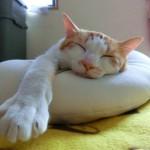 「今日は寝て明日から頑張ろう」がなくなる6つの習慣
