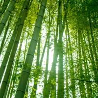 【日本史・世界史に共通する5つの必勝法】早稲田政経&国際教養に合格した人の勉強法